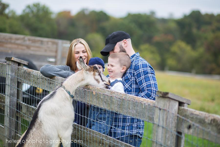 goat eats little boys shirt in family photo